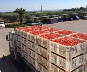 Multa di € 15.000,00 nell'autotrasporto di pomodori